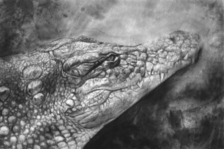 Artistic portrait of a Crocodile made with pencil photo