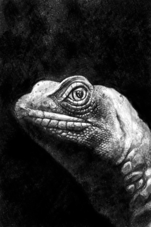 saurian: Iguana illustration handmade drawing with artistic textures