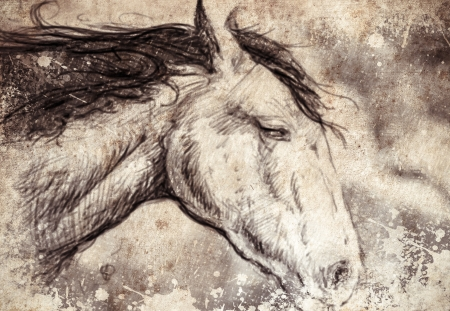 Sketch made with digital tablet, horse head photo
