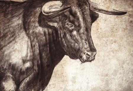 spanish bull: Sketch made with digital tablet of spanish bull Stock Photo