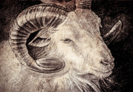 Sketch made with digital tablet of goat head with big horns photo