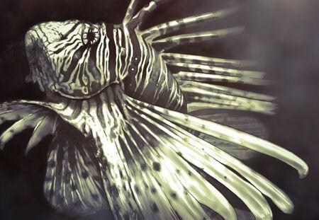 zebrafish: Illustration made with a digital tablet scorpion fish dangerous