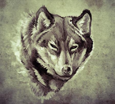 tatouage dragon: Croquis de l'art du tatouage, Illustration d'une t�te de loup Banque d'images