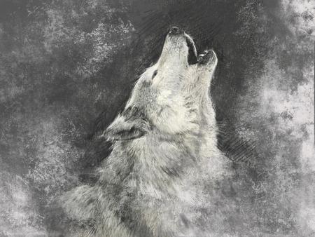 늑대, 회색 배경에 손수 그림