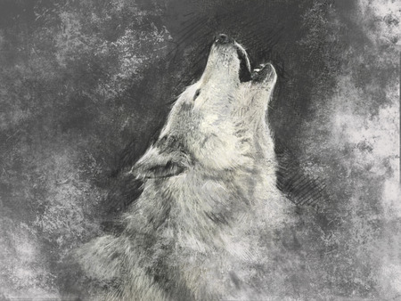 Wolf, handmade illustration on grey background 版權商用圖片