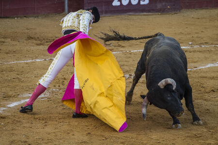 bullfights: Bullfight in Camarma of Esteruelas. Victor Janeiro, brother of the famous bullfighter Jesulin Ubrique in excellent bullfight.
