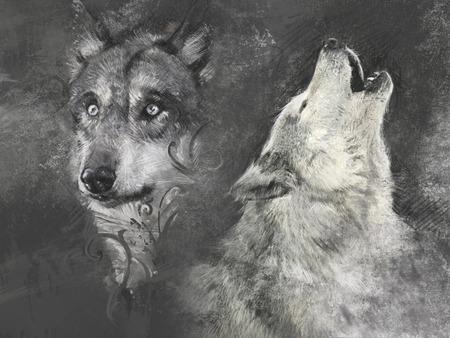 Wolf, handmade illustration on grey