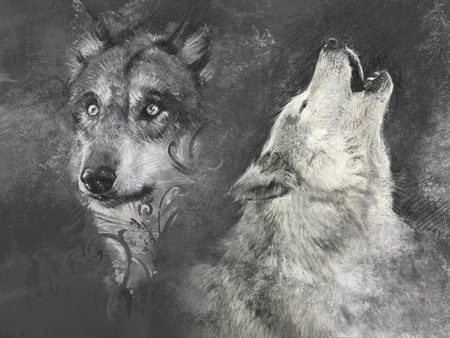 Wolf, handmade illustration on grey  illustration