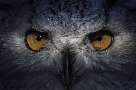 eagle owl Foto de archivo