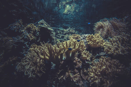 small coral reef ecosystem photo