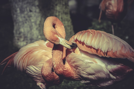Flamingo portrait from ZOO photo