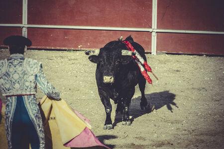plaza de toros: bullfight, traditional Spanish party where a matador fighting a bull Stock Photo