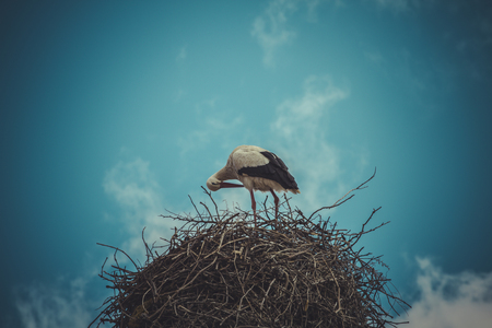 Nesting, Stork nest made of tree branches over blue sky in dramatic