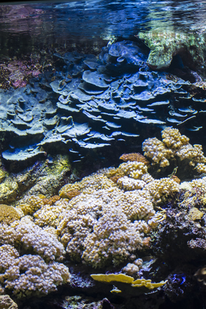 Aquatic, seabed with fish and coral reef Stock Photo - 29343800
