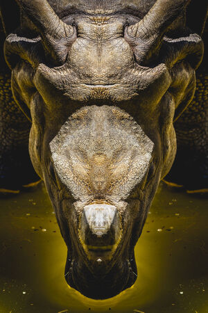 afrika: powerful head of a rhinoceros, leadership