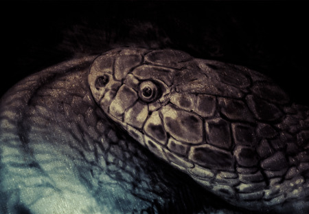 snake head: Sketch made with digital tablet, snake head