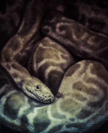 Sketch made with digital tablet of boa constrictor photo