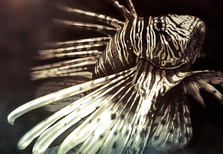 dragonfish: Illustration made with a digital tablet scorpion fish dangerous