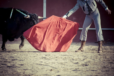 bull fighting: Entertainment, spectacle of bullfighting, where a bull fighting a bullfighter Spanish tradition Stock Photo