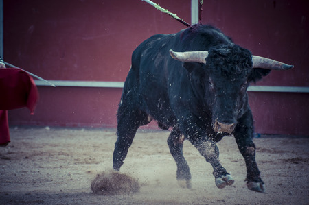 toros: Blood, spectacle of bullfighting, where a bull fighting a bullfighter Spanish tradition Stock Photo