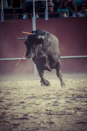 toros: Entertainment, spectacle of bullfighting, where a bull fighting a bullfighter Spanish tradition Editorial