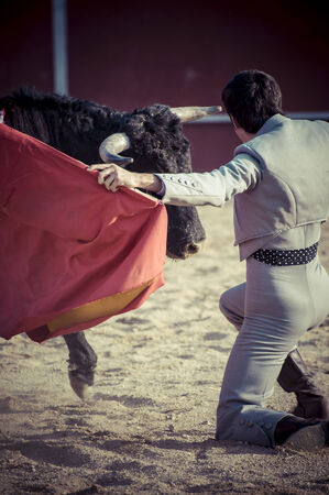 bullfighter: Entertainment, spectacle of bullfighting, where a bull fighting a bullfighter Spanish tradition Editorial