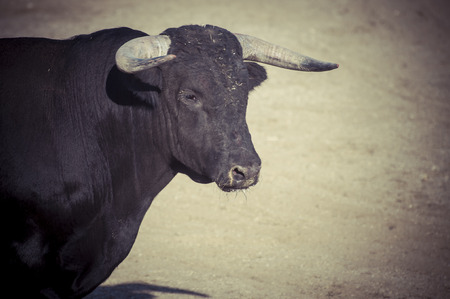 Courage, spectacle of bullfighting, where a bull fighting a bullfighter Spanish tradition