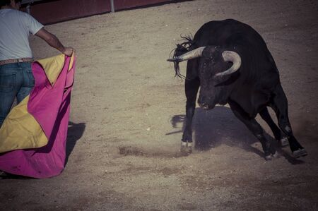 Entertainment, spectacle of bullfighting, where a bull fighting a bullfighter Spanish tradition photo