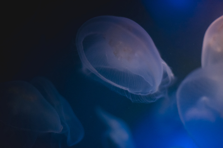 oceanography: Jellyfish into deep blue water Stock Photo