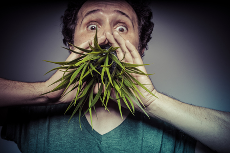 veganism: Joy, veganism concept man with green grass in the mouth Stock Photo