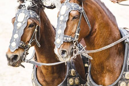 chariot: Horses, Roman chariot in a fight of gladiators, bloody circus Stock Photo