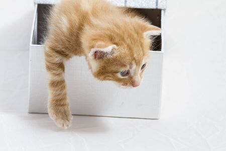 baby open present: small kitten stuck in a gift box, cuddly animal sweet face