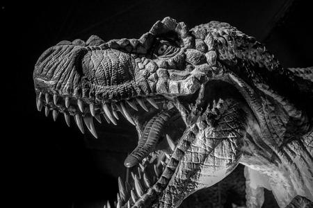 Tyrannosaurus rex dinosaur tusks, long, sharp teeth
