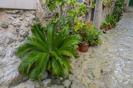rustic, flowerpots street in the tourist island of Mallorca, Valdemosa city in Spain Stock Photo