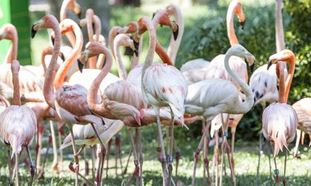 beautiful group of flamingos with their long necks and orange colors in the feathers