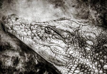 Illustration made with digital tablet, crocodile
