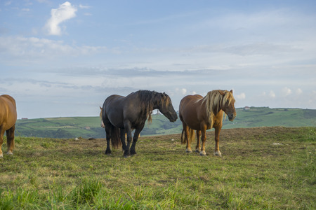 Equestrian, Horses in a meadow grazing at sunset in a rural field of Spain Stock Photo