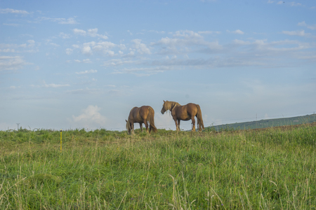 Equine, Horses in a meadow grazing at sunset in a rural field of Spain