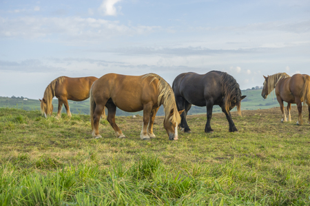 Horses in a meadow grazing at sunset in a rural field of Spain