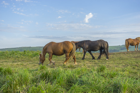 Freedom, Horses in a meadow grazing at sunset in a rural field of Spain Stock Photo