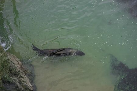 aerial view of a seal swimming happily by the sea