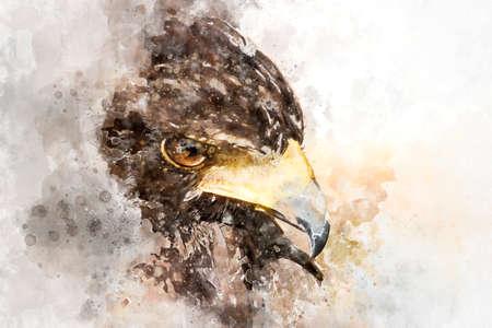 Watercolor, American Eagle mousetrap
