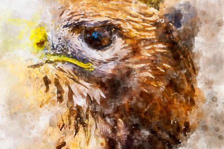 Watercolor, fauna, eagle, diurnal bird of prey with beautiful plumage and yellow beak