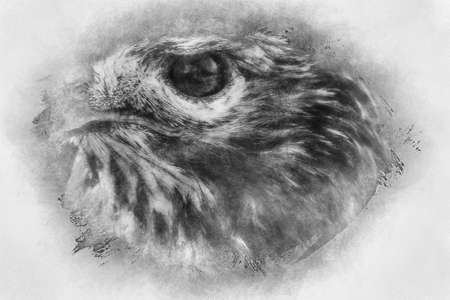 fauna, eagle, diurnal bird of prey with beautiful plumage and yellow beak black and white drawing