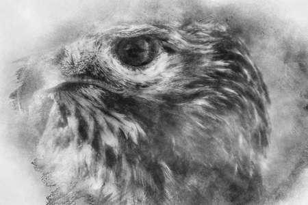 fauna, eagle, diurnal bird of prey with beautiful plumage and yellow beak black and white drawing Stock Photo