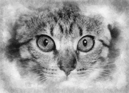 Kitten. common breed cat, with frightened eyes black and white drawing