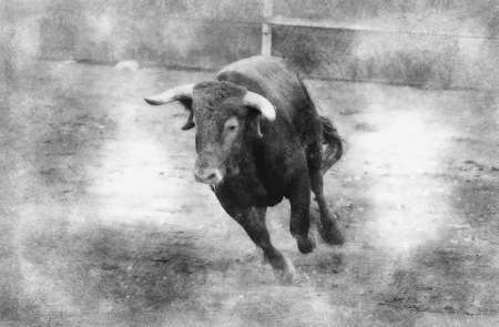 Brown bull attacking Spanish bullfighter black and white drawing