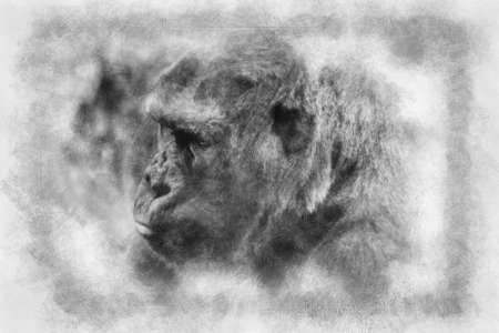 huge and powerful gorilla, natural environment black and white drawing Standard-Bild
