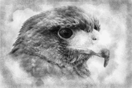The power of nature. Royal Eagle's head. black and white drawing Standard-Bild