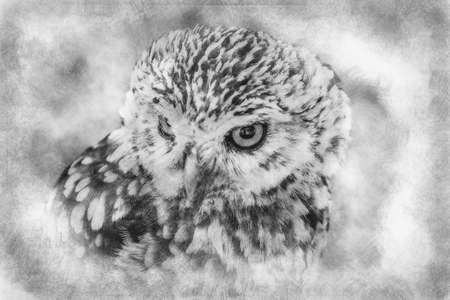 prey, cute little owl, gray and yellow beak and white feathers black and white drawing Standard-Bild